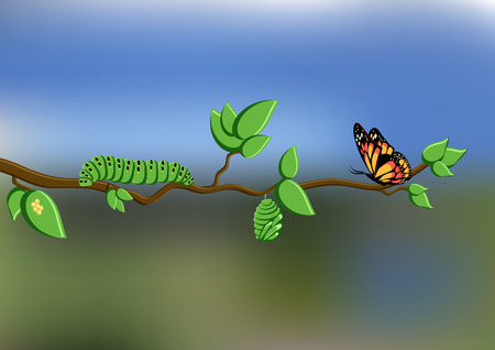 Life cycle of butterfly with eggs, caterpillar, pupa, butterfly on tree branch on natural background