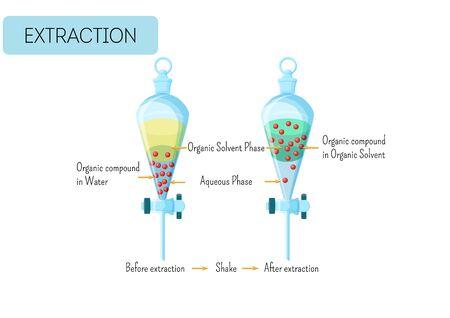 Chemische Extraktion einer organischen Verbindung aus einer Wasserlösung in ein organisches Lösungsmitteldiagramm. Pädagogische Chemie für Kinder. Cartoon-Stil-Vektor-Illustration.