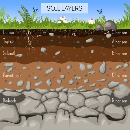 Soil layers diagram with grass, earth texture, stones, plant roots, underground species. Vettoriali