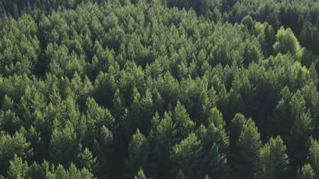 Aerial view of green conifers trees in countryside woodland. Drone zoom out spins above colorful texture in nature. Aerial drone view of big dense forest with green vegetation in countryside. Stockfoto