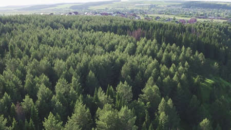 Summer forest aerial top view. Green conifers trees in countryside woodland. Drone above colorful texture in nature. Aerial drone view of big green dense forest in countryside.