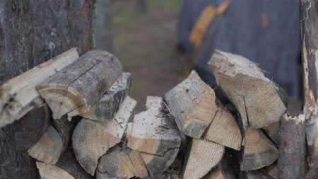 Male tourist hands stacks firewood between trees in camp. Chopping Wood near tent camping. Slow motion, hands. Outdoor travel. Summer vacation forest.