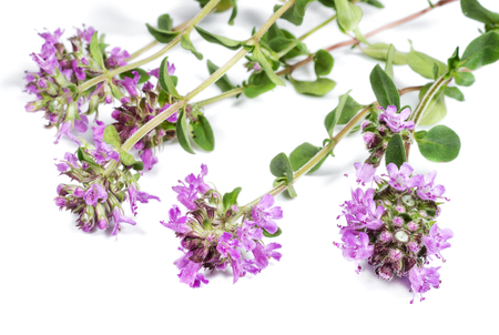 Thyme on white background closeup Banque d'images