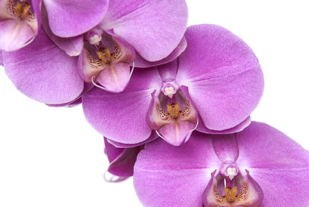 Beautiful orchid flowers on white background. Flowers and plants.