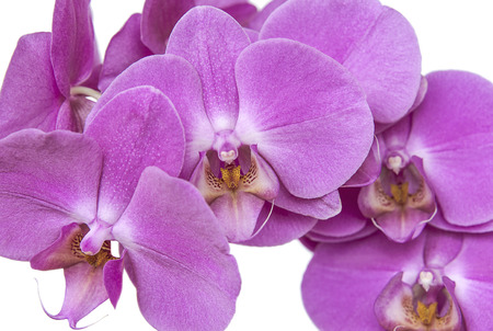 Beautiful pink orchid flowers. Flowers and plants.