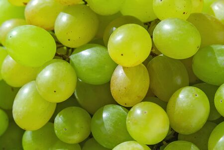 Green grape berries in the sun rays close up. Fruits and berries