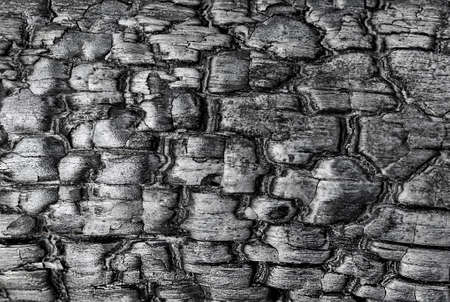 Texture of the charred wood close up background. Backgrounds and textures