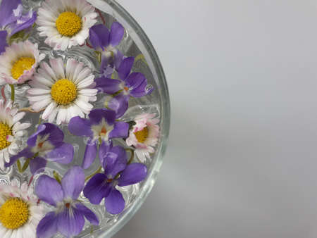 Spring scene with daisy flowers in water. Sun and shadows. Minimal nature background.