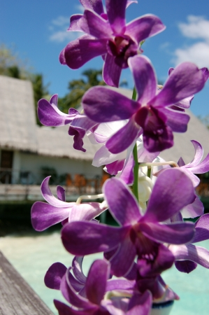 purple orchid: A purple orchid Stock Photo