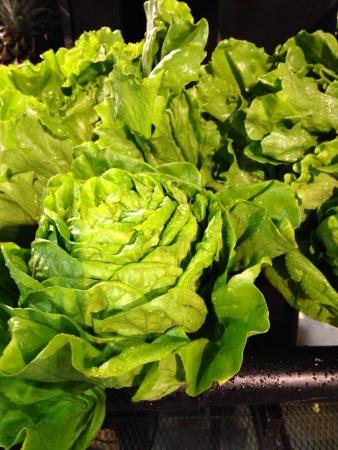 butter head: Butter head salad Stock Photo