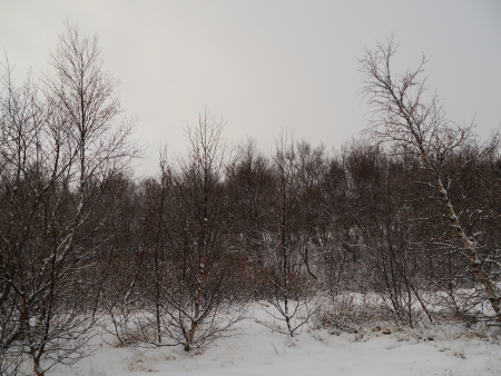 Trees during winter time at Iceland Stock Photo