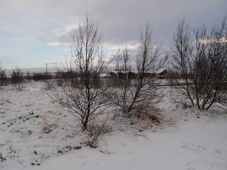 Trees during winter filled with snow at Iceland Stock Photo