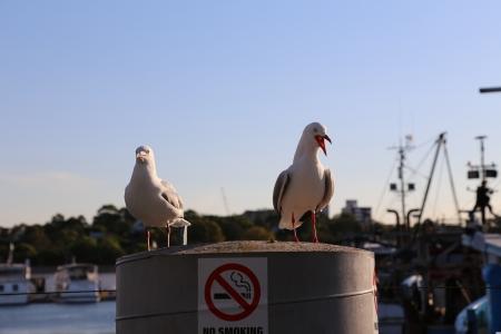 Profile of seagull