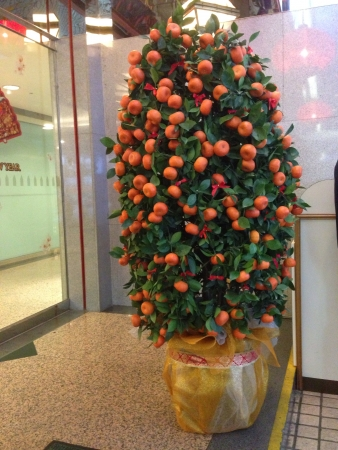 Mandarin Orange Tree in front of hotel foyer for Chinese New Year 2014 decoration Stock Photo