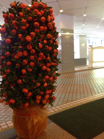 Mandarin Orange Tree in front of hotel foyer 2014 Lunar New Year decoration