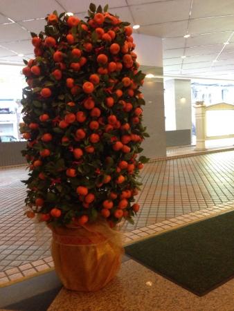 Juicy round mandarin orange plant 2014 Lunar New Year decoration