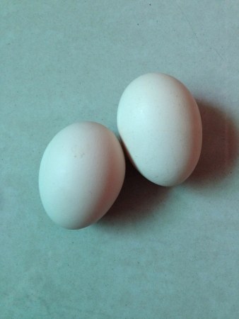 Two Eggs on the floor