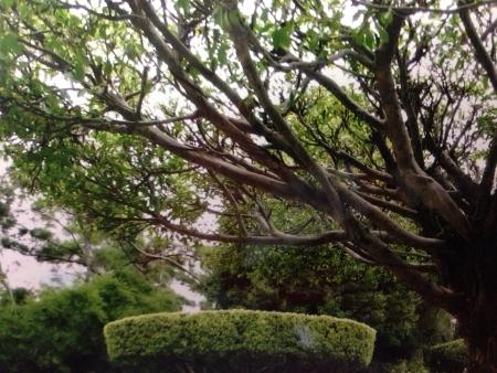 Natural trees at outdoor