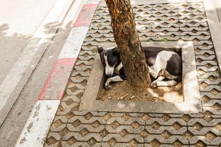 scavenging: Thailand street dog
