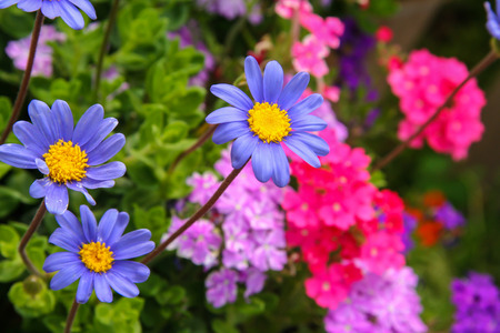outstanding: Blue daisy outstanding