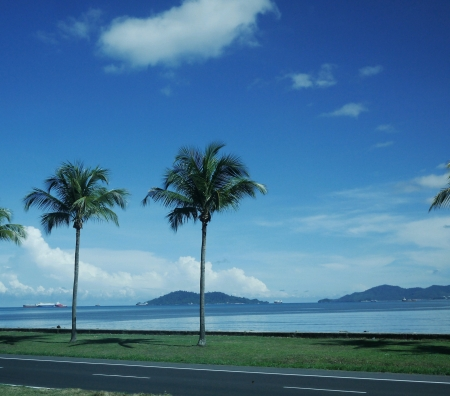 beside: Coconut trees along the road beside the sea  Stock Photo