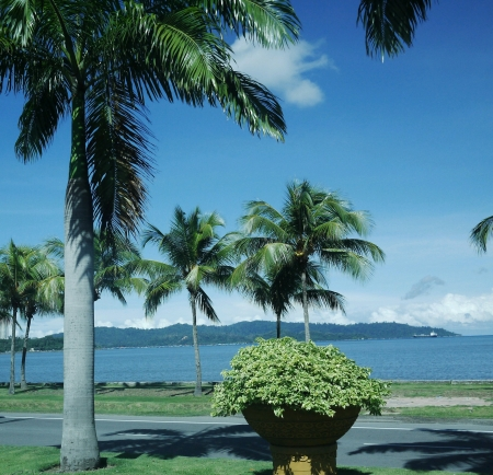 beside: Coconut tree beside the sea and road