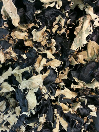 cloud ear fungus: Dried ear fungus Stock Photo