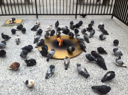 huddling: Pigeons huddling around the eternal fire memorial at Daily Plaza in Chicago Stock Photo