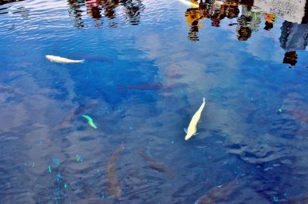 springwater: oshino hakkai deep pond