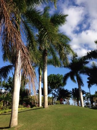 ハワイでゴルフ 写真素材