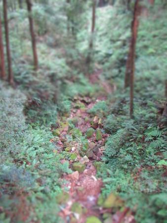 Pathway between grasses