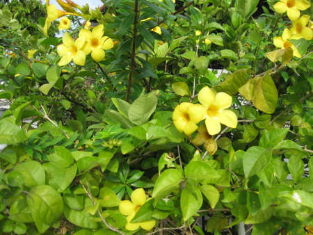 yellowish: Yellowish flowers with green leaves