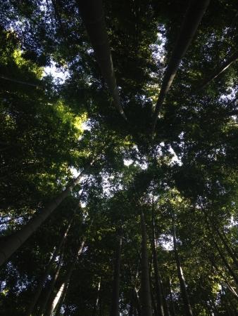 japones bambu: Jard�n de bamb� japon�s Foto de archivo