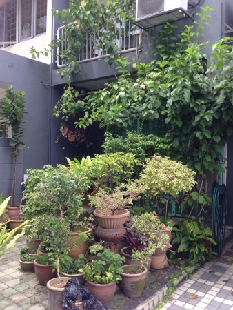 Small garden in front yard of a Malaysian house Stock Photo