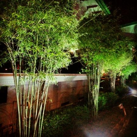 Árboles de bambú en la noche