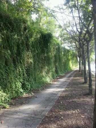treelined: Pathway with treelined