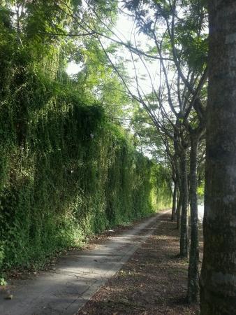 treelined: Treelined and pathway