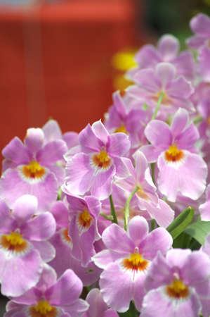 purple orchid Stock Photo - 14786103
