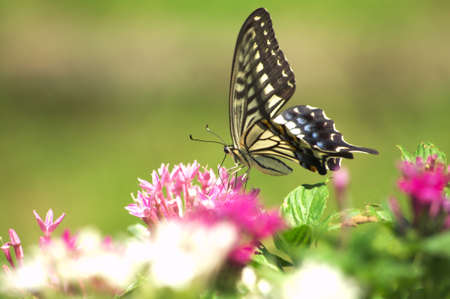 butterfly on flower Stock Photo - 15024216