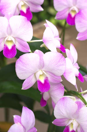 cute white and pink orchid photo