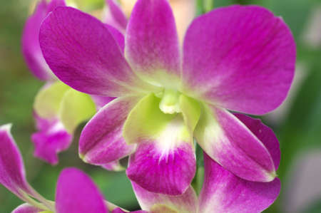cute pink orchid Stock Photo - 15387145