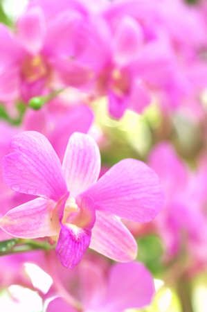 cute pink orchid photo