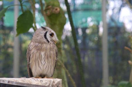owl on tree photo