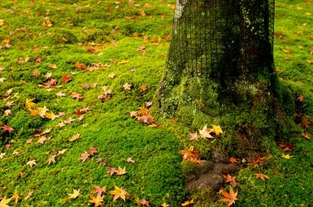 yellow maple leaf on green moss Stock Photo - 23917145