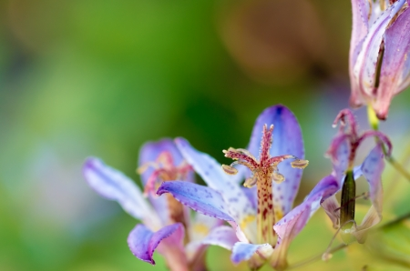 cute toad lily photo