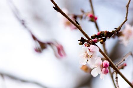 cute cherry tree photo