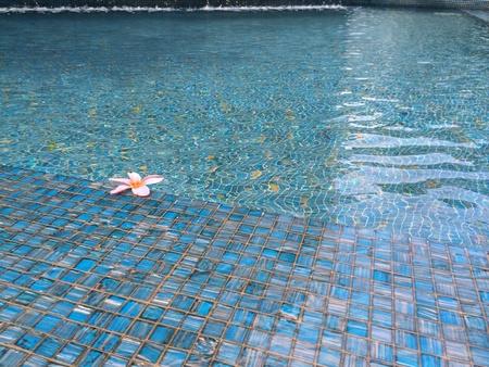 青いタイル張りのプールに浮かぶ花 写真素材