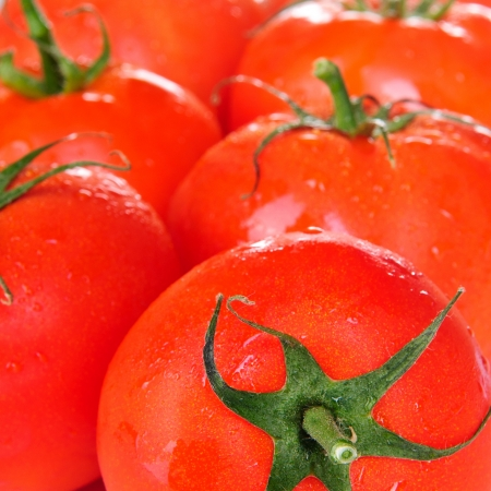 photo of very fresh tomatoes  photo