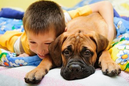 家の中で少年と遊んだ小さな子犬ブルマスティフ 写真素材