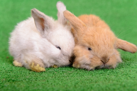 bunny ears: small newborn rabbits on a green background